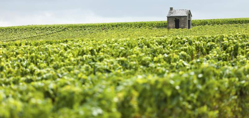 A Hut Stands Alone In A Vineyard In The Champagne Region Of France
